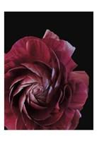 Floral Closeup 3 Fine-Art Print