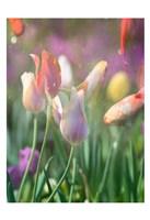 Tulip Swim B Fine-Art Print