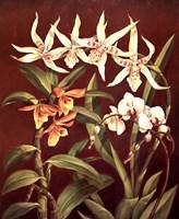 Orchid Trio I Fine-Art Print