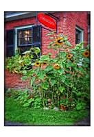 Country Store Sunflowers Fine-Art Print