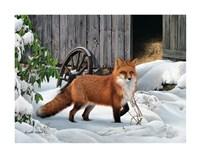 Fox and Barn Fine-Art Print