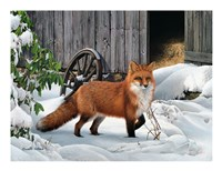 Fox and Barn Fine-Art Print