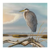 Marsh Watch - Great Blue Heron Fine-Art Print