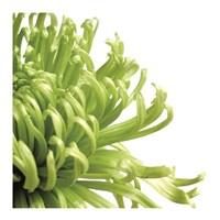 Green Bloom 2 (detail) Fine-Art Print