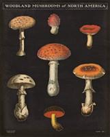 Mushroom Chart III Fine-Art Print