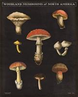 Mushroom Chart II Fine-Art Print