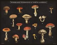 Mushroom Chart I Fine-Art Print