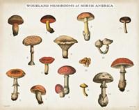 Mushroom Chart I light Fine-Art Print