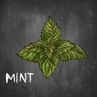 Mint on Chalkboard Fine-Art Print