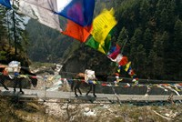 Mule train on trail to Namche Bazaar, Larja Bridge, Khumbu, Nepal Fine-Art Print
