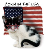 Born In USA Fine-Art Print