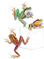 Three Frogs Fine-Art Print