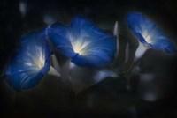 Blue Eyes Blue Fine-Art Print