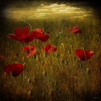 Fields of Red I Fine-Art Print