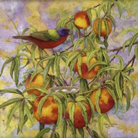 Painted Bunting & Peaches Fine-Art Print