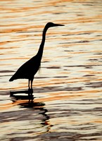 Silhouette of Great Blue Heron in Water at Sunset Fine-Art Print