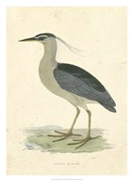 Vintage Night Heron Fine-Art Print