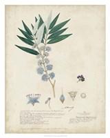 Delicate Blue Descubes I Fine-Art Print