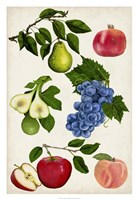 Fruit Collection I Fine-Art Print