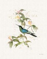 Colorful Hummingbirds IV Fine-Art Print