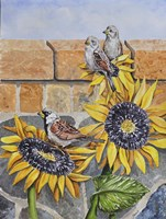 House Sparows with Sunflowers Fine-Art Print