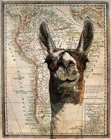 South America Llama Map Fine-Art Print