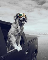 Pop of Color Cool Dog Fine-Art Print