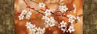 Orange Sakura Fine-Art Print
