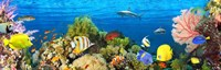 Life in the Coral Reef, Maldives Fine-Art Print
