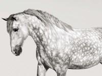 Leia, Andalusian Pony Fine-Art Print