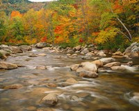 River flowing through Forest in Autumn, White Mountains National Forest, New Hampshire Fine-Art Print