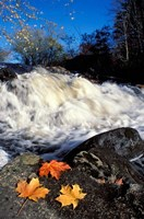 Maple Leaves and Wadleigh Falls on the Lamprey River, New Hampshire Fine-Art Print