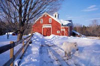 Pony and Barn near the Lamprey River in Winter, New Hampshire Fine-Art Print