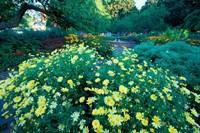Prescott Park Garden, New Hampshire Fine-Art Print