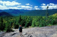 Hiking on Mt Crawford, New Hampshire Fine-Art Print