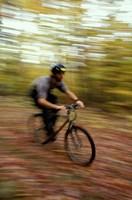 Mountain Biking, Old Logging Road, New Hampshire Fine-Art Print