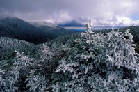 Snow Coats the Boreal Forest on Mt Lafayette, White Mountains, New Hampshire Fine-Art Print