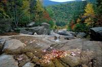 Fall Foliage, Appalachian Trail, White Mountains, New Hampshire Fine-Art Print