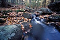 Great Brook Trail in Late Fall, New Hampshire Fine-Art Print