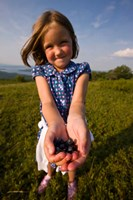 Child, blueberries, Alton, New Hampshire Fine-Art Print