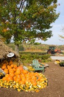 Gourds at the Moulton Farmstand, Meredith, New Hampshire Fine-Art Print