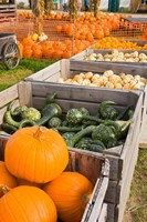 Pumpkins and gourds at the Moulton Farm, Meredith, New Hampshire Fine-Art Print