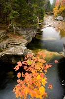Upper Falls on the Ammonoosuc River, White Mountains, New Hampshire Fine-Art Print