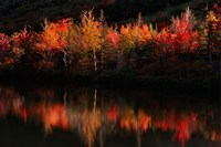 Fall Foliage with Reflections, New Hampshire Fine-Art Print