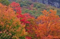 Bemis Falls Trail, Crawford Notch State Park, New Hampshire Fine-Art Print