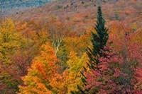 Autumn at Flume Area, Franconia Notch State Park, New Hampshire Fine-Art Print