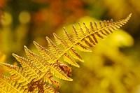 New Hampshire, Fern frond flora Fine-Art Print