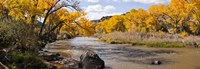 Rio Grande River, Pilar, New Mexico Fine-Art Print