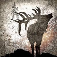 Calling Elk Framed Print