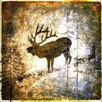 High Country Elk Fine-Art Print